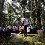 Aktivitas Sekolah Lapangan Pertanian Ekologis Terpadu, Program Desa Makmur Peduli Api Diperluas ke Tiga Desa di Kecamatan Nanga Taya