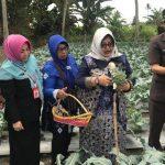 Dorong Peningkatan Ekonomi Keluarga, Pertamina Berikan Bantuan Untuk Kelompok Wanita Tani Rejeki Kartini