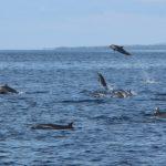 KKP Catat Kemunculan 546 Individu Mamalia Laut di Perairan Indonesia Timur