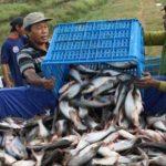 KKP dan UNIDO Selenggarakan ToT Tentang Penerapan CPIB Ikan Patin dan Lele