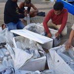 Lagi, KKP Lepasliarkan 32.400 Benih Lobster di Perairan Banyuwangi