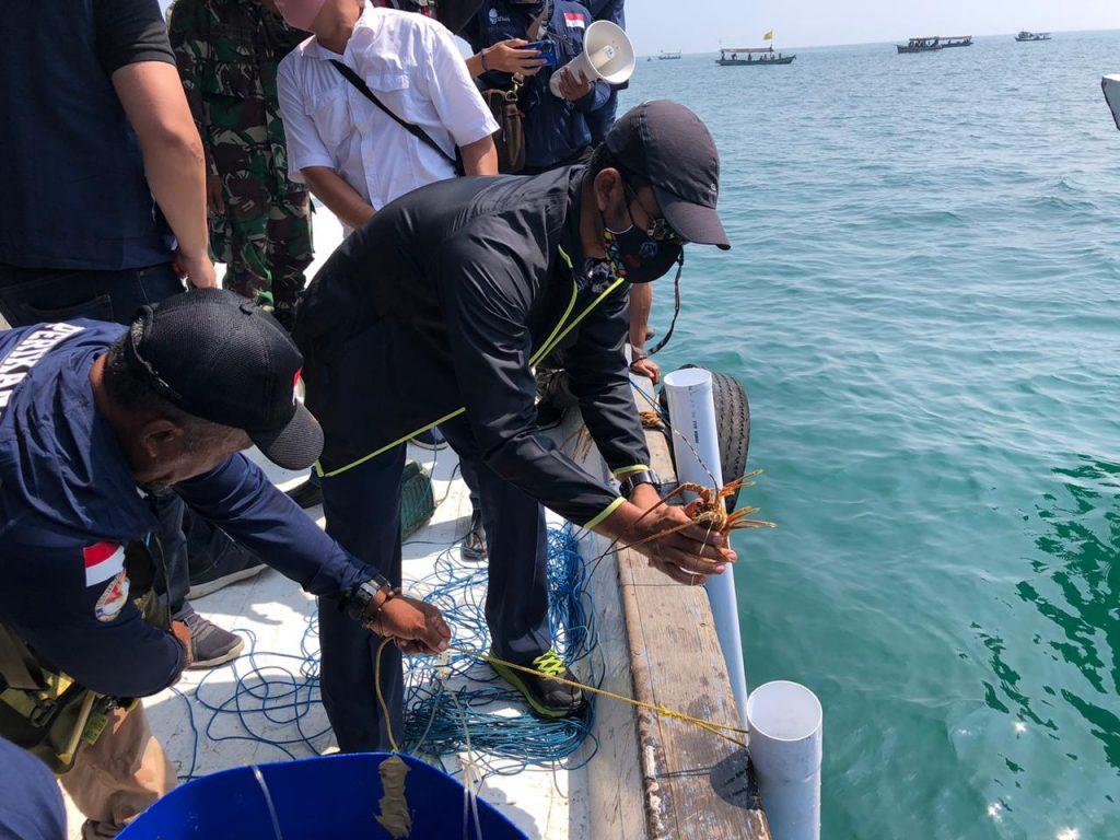 KKP Lepasliarkan 250 Ekor Lobster di Lokasi Tenggelamnya Kapal HMAS Perth 1