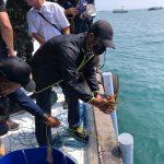 KKP Lepasliarkan 250 Ekor Lobster di Lokasi Tenggelamnya Kapal HMAS Perth
