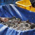 Salurkan Bantuan Induk Ikan, KKP Gaungkan Budidaya Ikan Mandiri