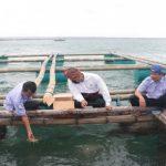 Siap Dongkrak Budidaya, KKP Perkenalkan Inovasi Pakan Pembesaran Lobster Pasir