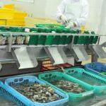 Ini Langkah-Langkah KKP Pastikan Produk Perikanan Bermutu Tinggi