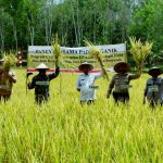 Kelompok Bina Tani Organik Menjadi Pejuang Pangan di Tengah Pandemi