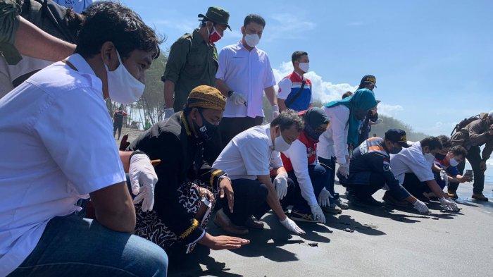 Bentuk Komitmen Pada Lingkungan, Pertamina Lanjutkan Program Konservasi Penyu di Pesisir Pantai Selatan Cilacap 1